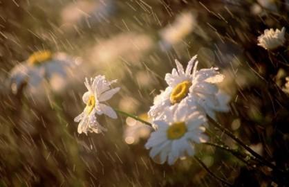 雨をテーマにした歌