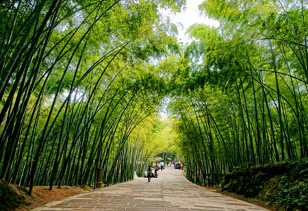 竹に関する歌