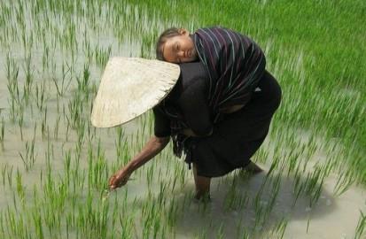 ベトナムの子守唄