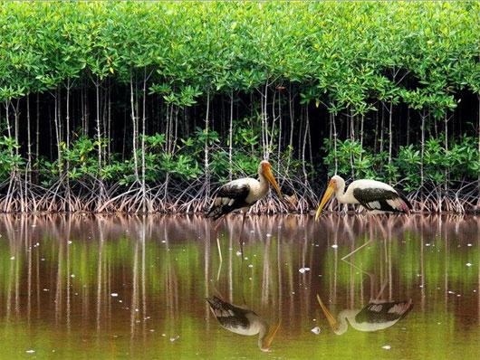 越南可持续发展红树林