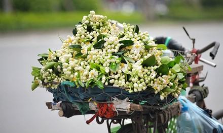 柚子花——三月的暗香