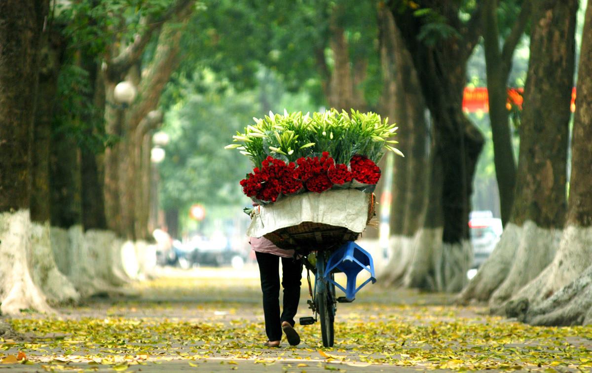 Flores que simbolizan el verano de Hanoi