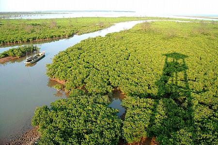 Taman Nasional Xuan Thuy -  Bumi baik tempat  burung  suka  bertengger