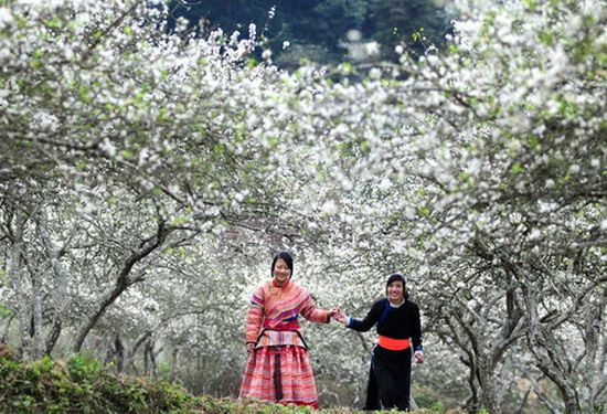 Festival Bunga Ban-Dien Bien-2017: Tempat berhimpunnya kebudayaan etnis-etnis daerah Tay Bac