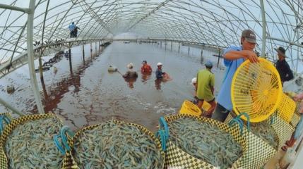 気候変動の条件下におけるエビ養殖業の発展