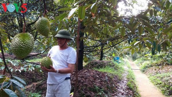 メコンデルタの農業