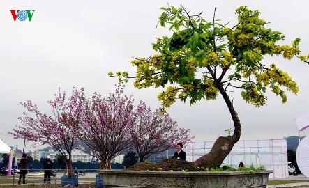 3月中旬に、「イェントゥ・ハロン桜・梅祭り」開催