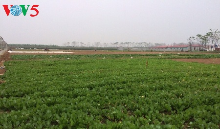 Saudari Tran Thu Hang ingin membawa bahan makanan yang baik kepada para konsumen