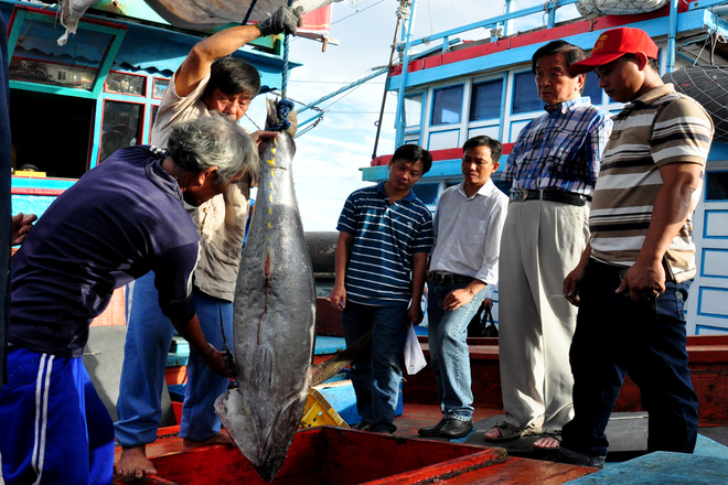 Vietnam tries to fully tap tuna catching industry