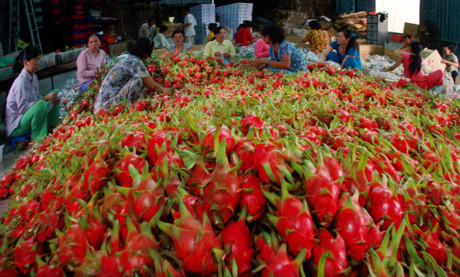 Vietnamese farm produce exports should prosper in 2016