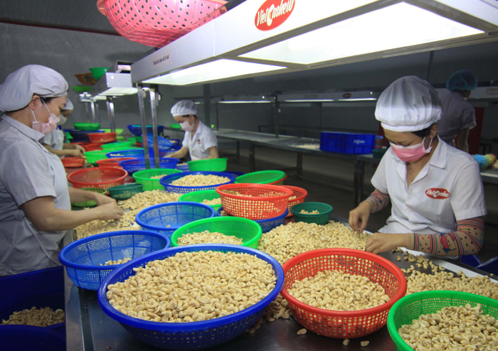 Vietnam's cashew exports forecast to rise in 2016
