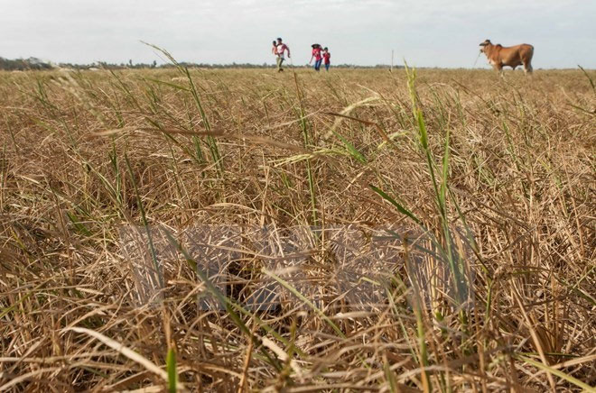 Crop restructuring to save water