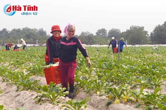 Chain model increases Vietnamese agriculture values