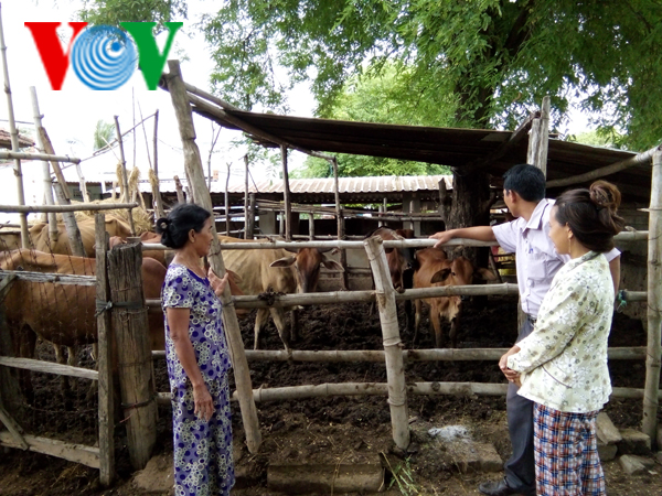 Ninh Thuan farmers' mutual support for economic development