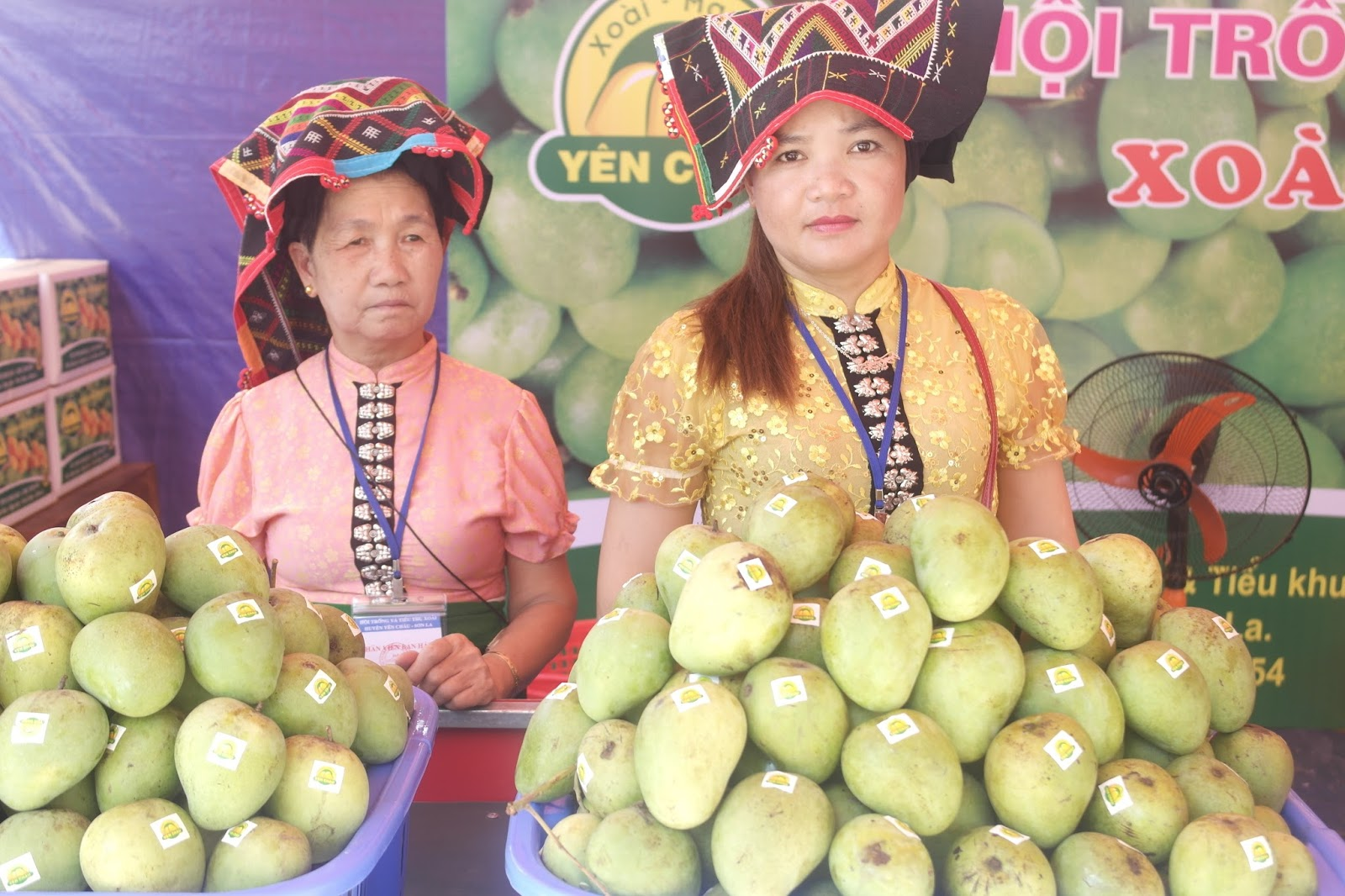Son La farmers develop Yen Chau mango brand