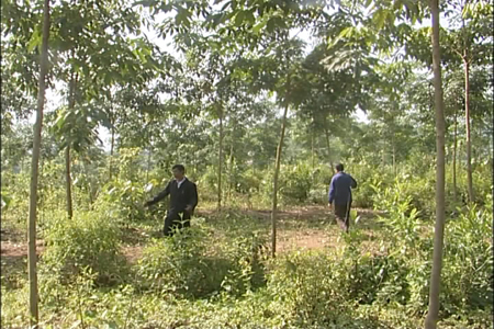 Dien Bien province reduces poverty by growing rubber trees