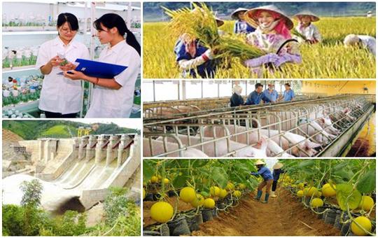 Vietnam's agriculture identifies challenges for development in 2017