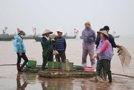 ナムディン省ザオハイ魚市場