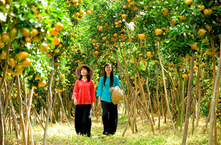 ドンタップ省のライブン蜜柑畑