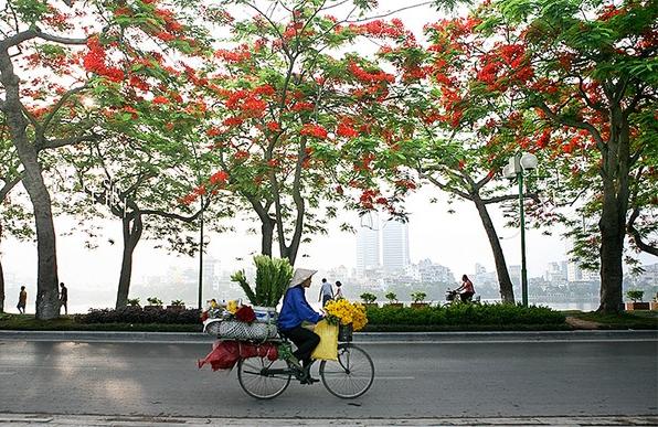 贩花自行车-默默的人生