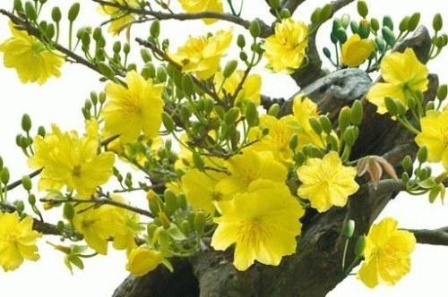 Hello Spring-Mua xuan oi!