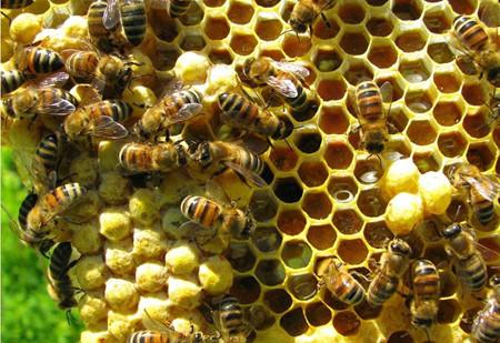 Bienenzucht und die Anpassung an den Klimawandel