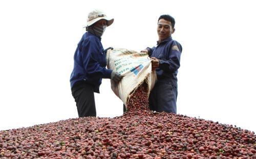 Entwicklung eines nachhaltigen Kaffeeanbaus