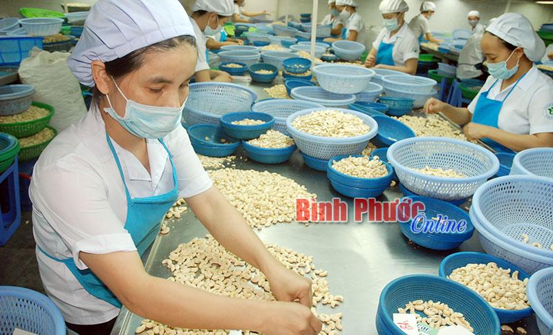 Markenzeichen der Cashewnüsse aus Binh Phuoc nachhaltig fördern