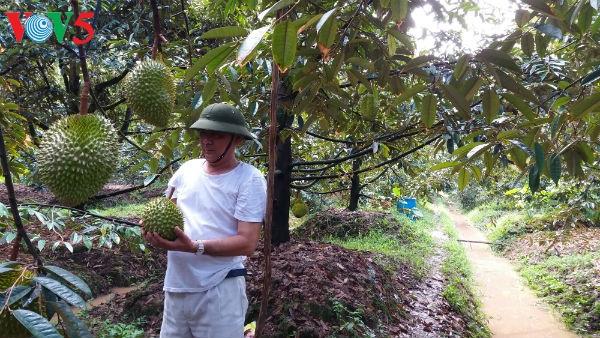 Landwirtschaft im Mekongdelta steht vor Herausforderungen bei der Eingliederung