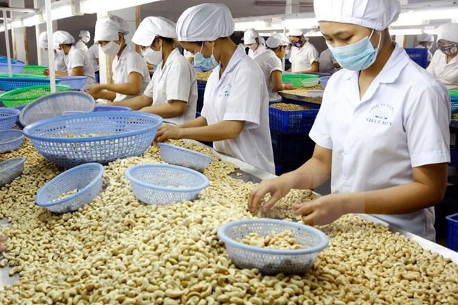"Mengembangkan secara berkesinambungan brand kacang mete provinsi Binh Phuoc"""