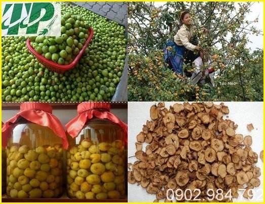 Câu chuyện cây táo Mèo của đồng bào người Mông tỉnh Yên Bái