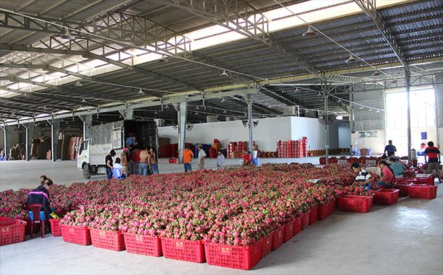 Đưa thương hiệu rau quả Việt nam đến thị trường quốc tế