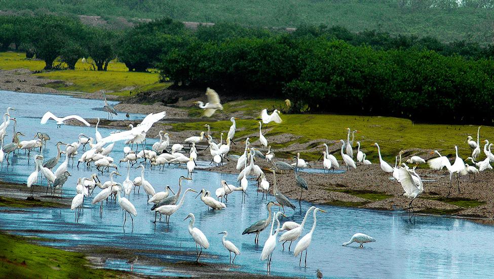Vườn quốc gia Xuân Thủy, nơi đất lành chim đậu