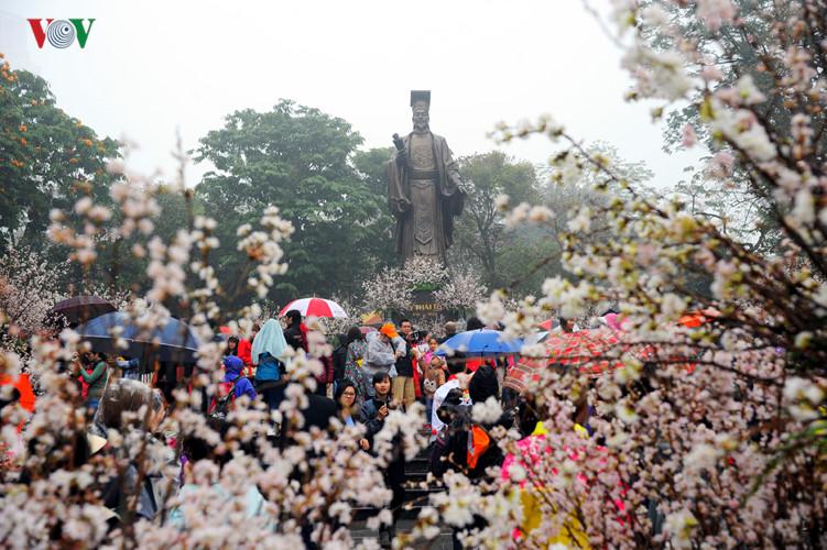 Hanoi hosts Japan culture exchange, cherry blossom exhibition