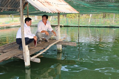 Préstamo en grupo asociado beneficia a agricultores de Tay Ninh