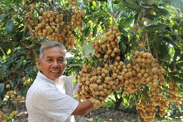 Agricultores de Dong Thap por exportar más