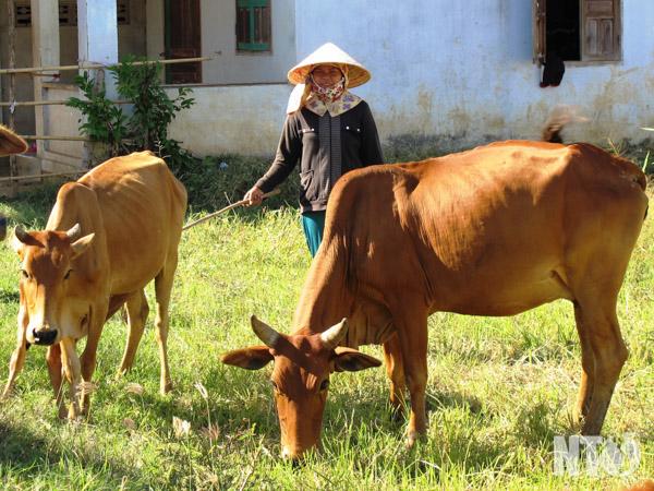 Campesinos de Ninh Thuan se ayudan por el desarrollo económico
