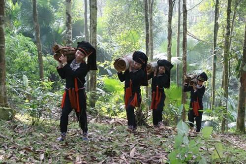 Producción de canela ayuda a étnicos de Yen Bai a escapar de la pobreza