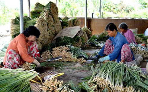 Vietnam por reducción de la pobreza y cumplimiento de sus Objetivos de Desarrollo