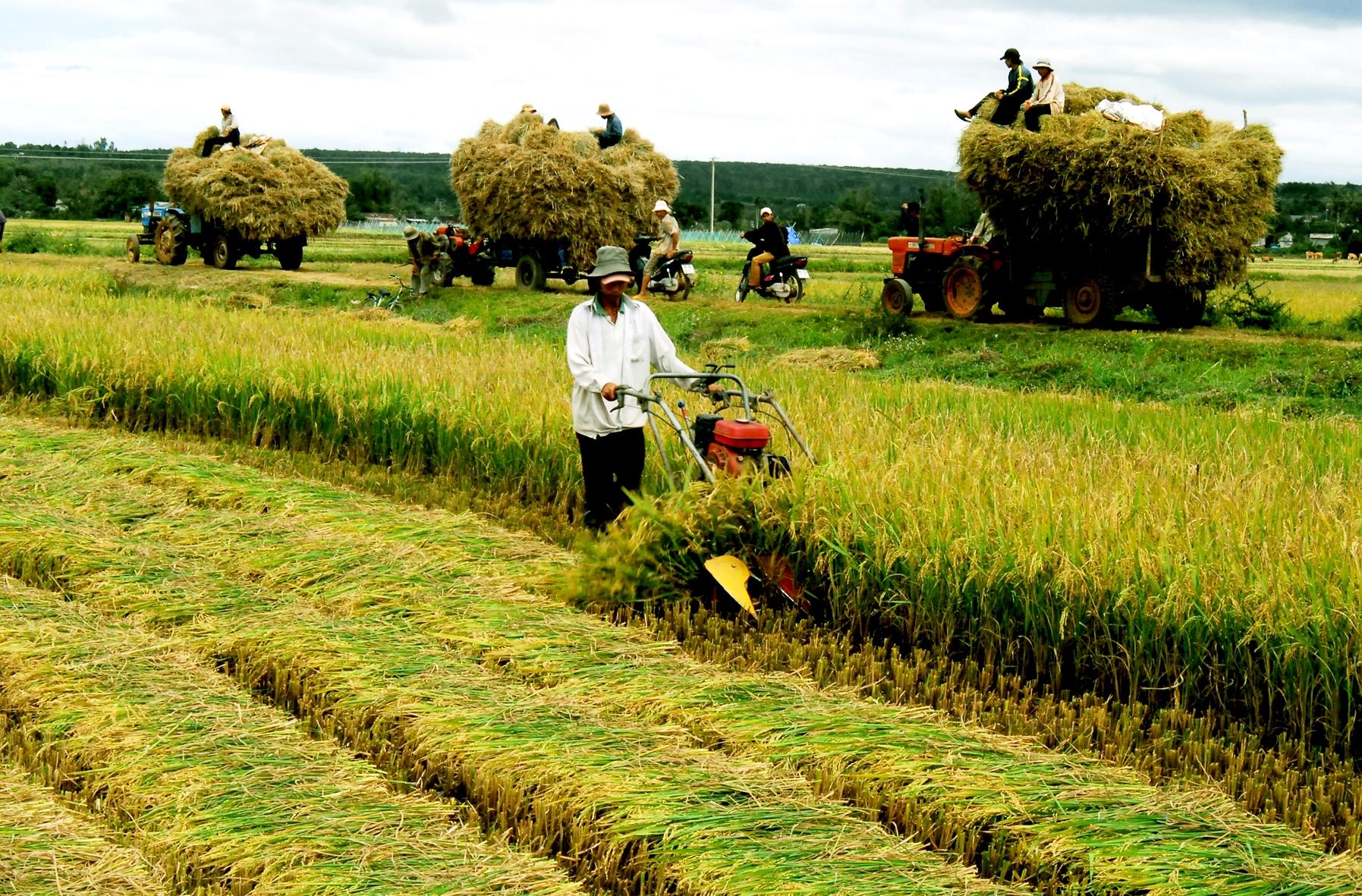 Vietnam por desarrollar cooperativas agrarias de nueva generación