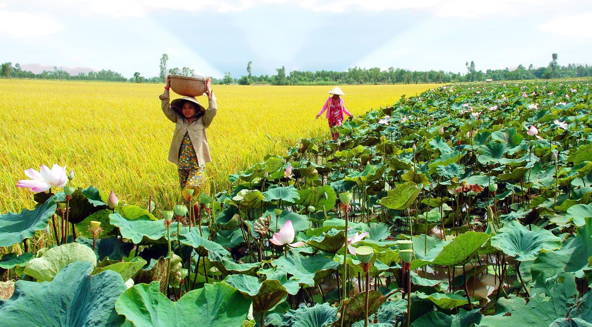 Visita a humedal Dong Thap Muoi en temporada de crecidas