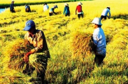 Agricultura en región del Delta del río Mekong ante retos de integración internacional