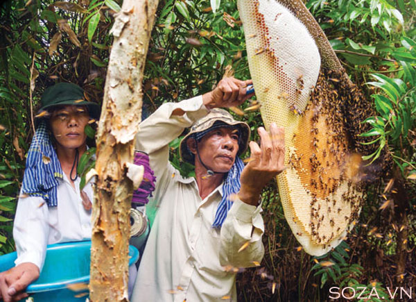 Memelihara lebah madu mencapai kesejahteraan dan menghadapi perubahan iklim