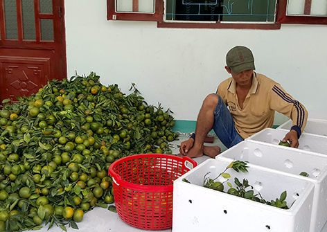 Kaum tani propinsi Hau Giang melakukan konektivitas untuk memasarkan brand buah jeruk