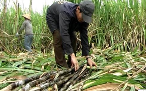 Propinsi Hau Giang berusaha mencapai 70 persen kepala keluarga yang pandai berproduksi dan berbisnis
