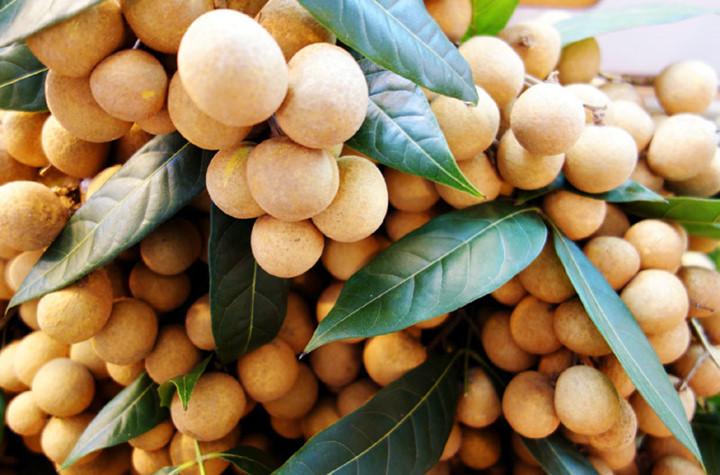 Bermacam jenis  buah-buahan Vietnam