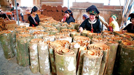 安沛省香桂种植区的温饱生活