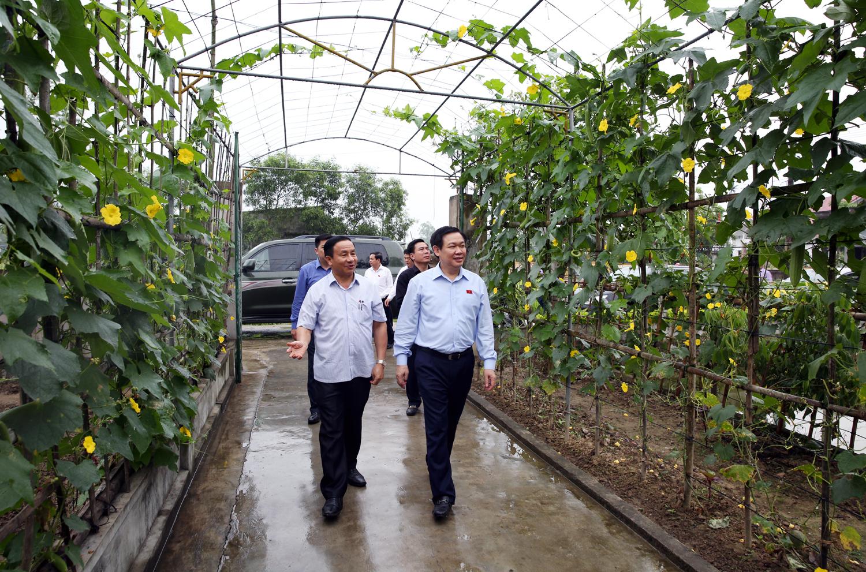 越南政府副总理王庭惠视察河静省新农村建设示范村
