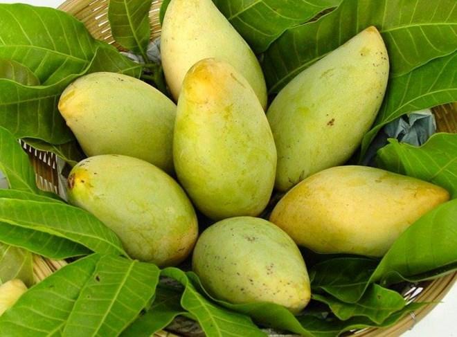 US to open door for Vietnamese mangoes