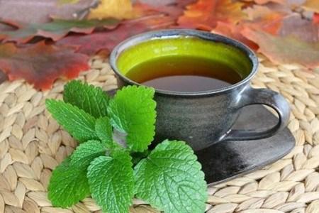 Công dụng của tinh dầu chiết xuất từ các dược liệu thiên nhiên điều trị các bệnh về đường hô hấp